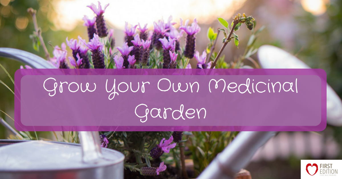 Grow Your Own Medicinal Garden Image