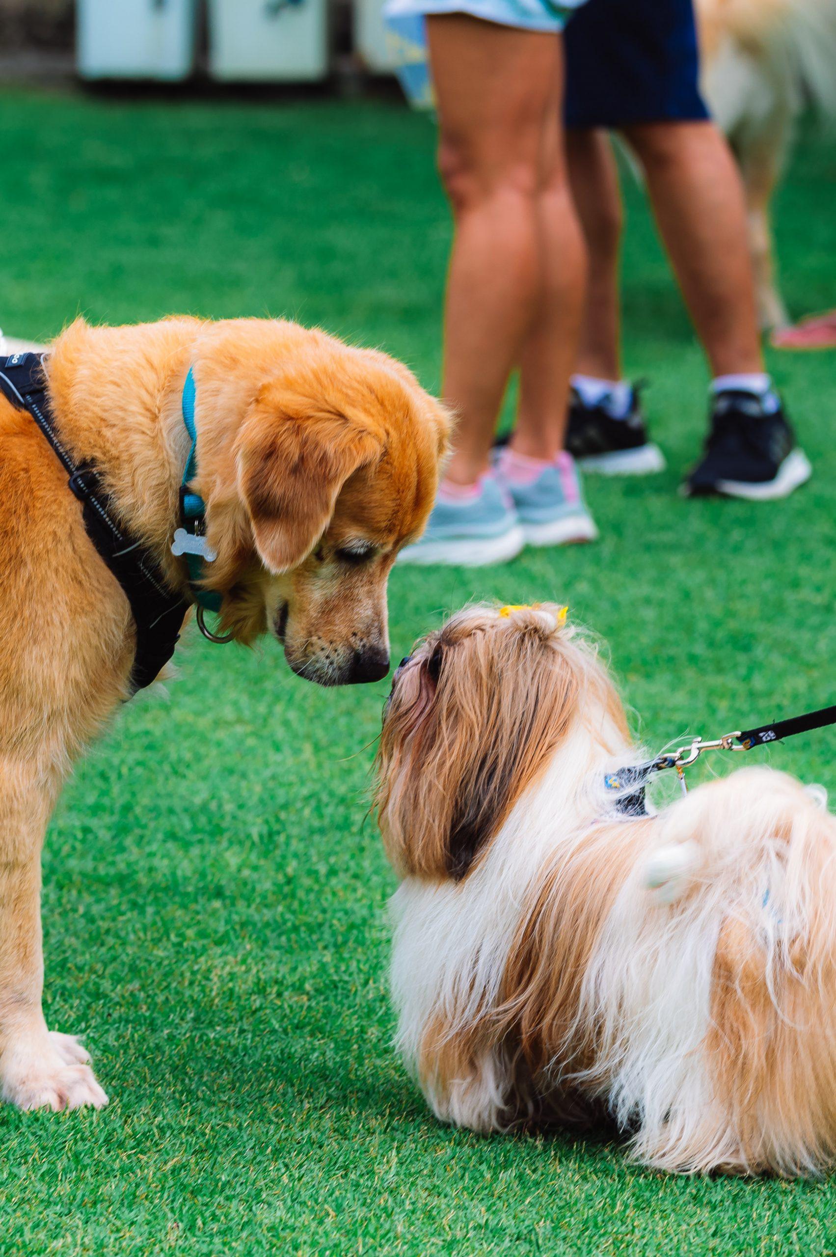 Use First Aid - Dog Park